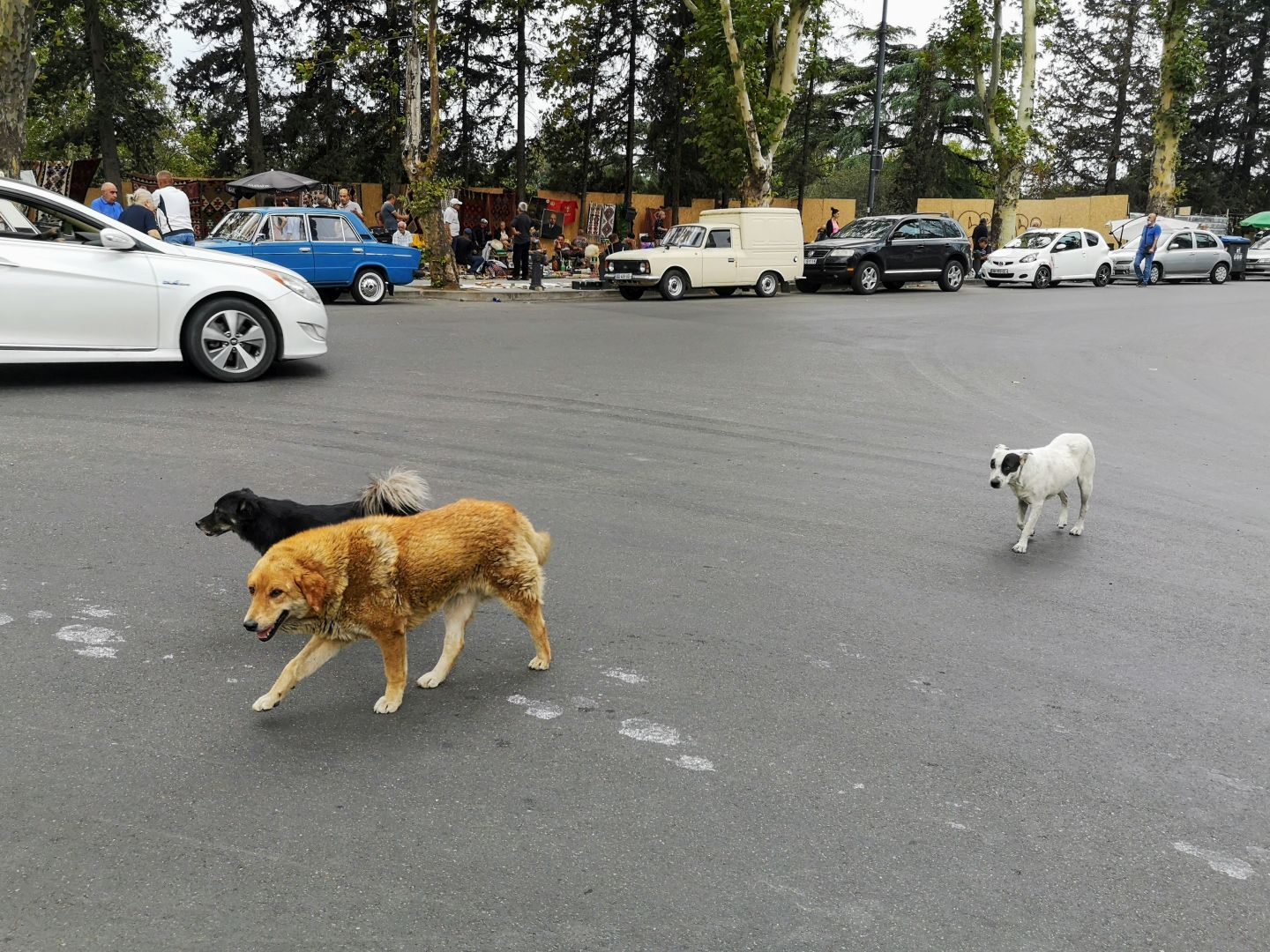 street dogs in georgia country