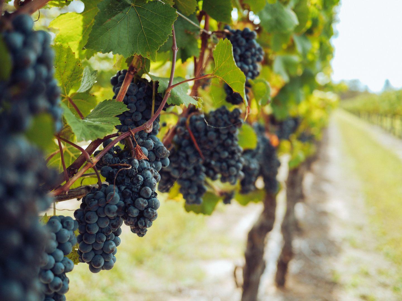 georgian wine and wineries